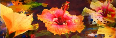 Hibiscus Medley